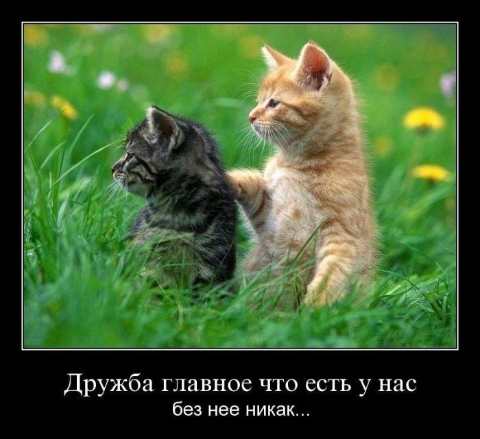 Демотиваторы 18.09.2014 (31 фото)