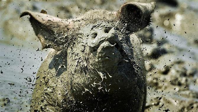 Фотографии животных за неделю (24 фото)
