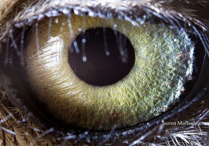 Глаза животного мира (18 фото)
