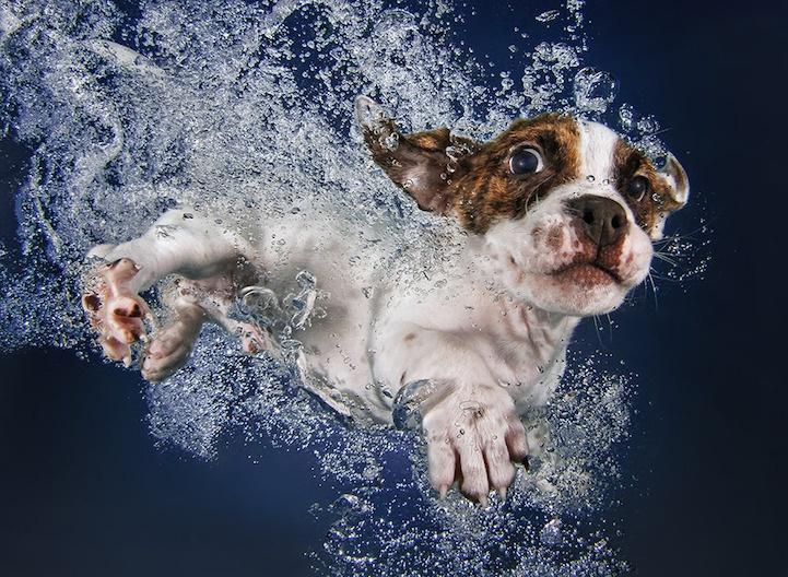 Смешные плавающие щенки (10 фото)