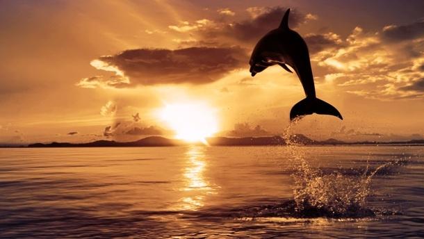 Интересные факты о дельфинах (12 фото)