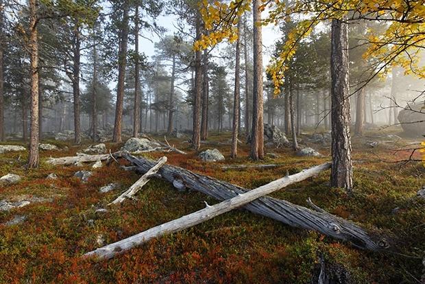 Лучшие грибные места по всему миру (10 фото)