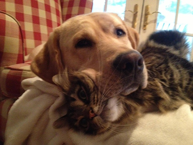 """Собаки и их """"коты-пуфики"""" (14 фото + 1 гифка)"""