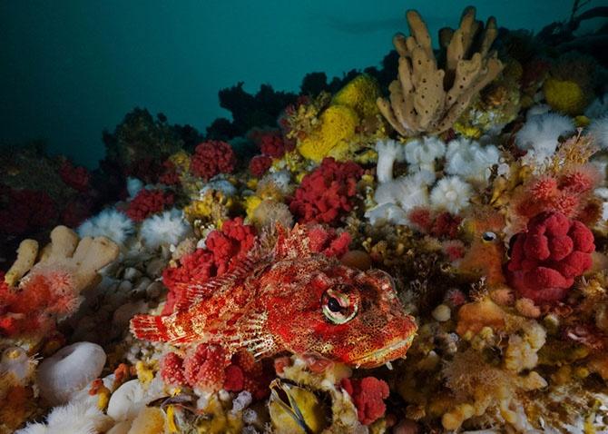 На глубине холодного моря (22 фото)