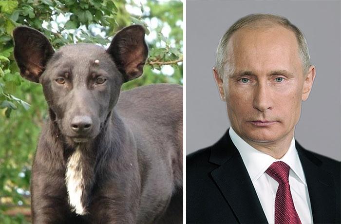 Собаки и их несобачьи двойники (14 фото)