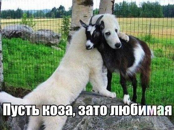 Веселые картинки 25.09.2014 (19 фото)