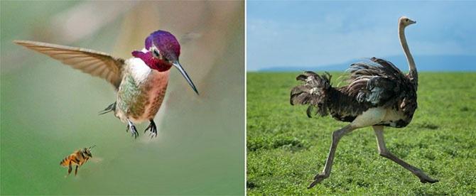 Карлики и гиганты в мире животных (20 фото)