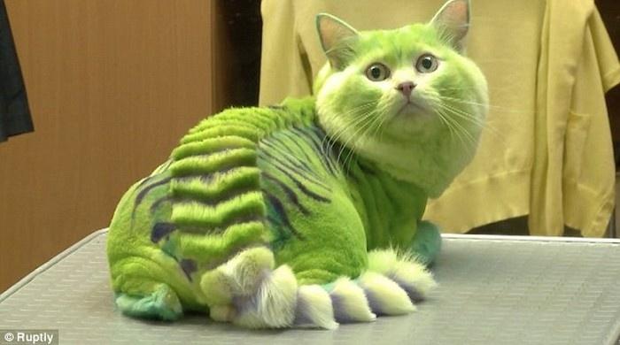 Разукрась кота! (4 фото)
