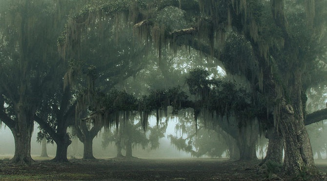 Фантастические туманные пейзажи (29 фото)
