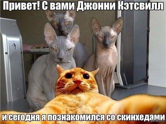 Веселые картинки 29.09.2014 (26 фото)