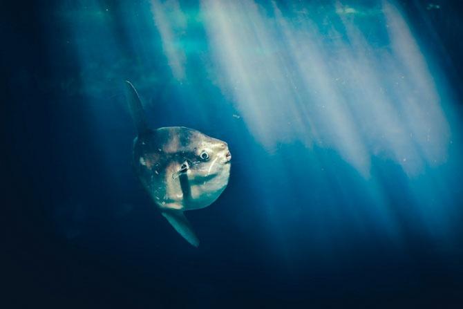 Луна Мирового океана (10 фото)