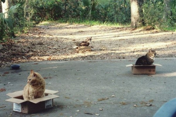 Милые животные (20 фото + 3 гифки)