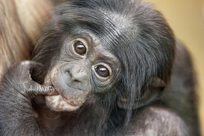 Рейтинг самых умных животных (10 фото)