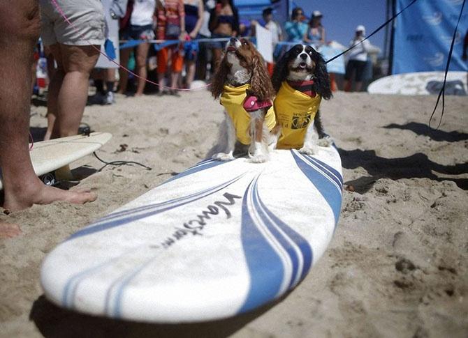 Как прошел самый необычный конкурс сёрфинга в Калифорнии (18 фото)