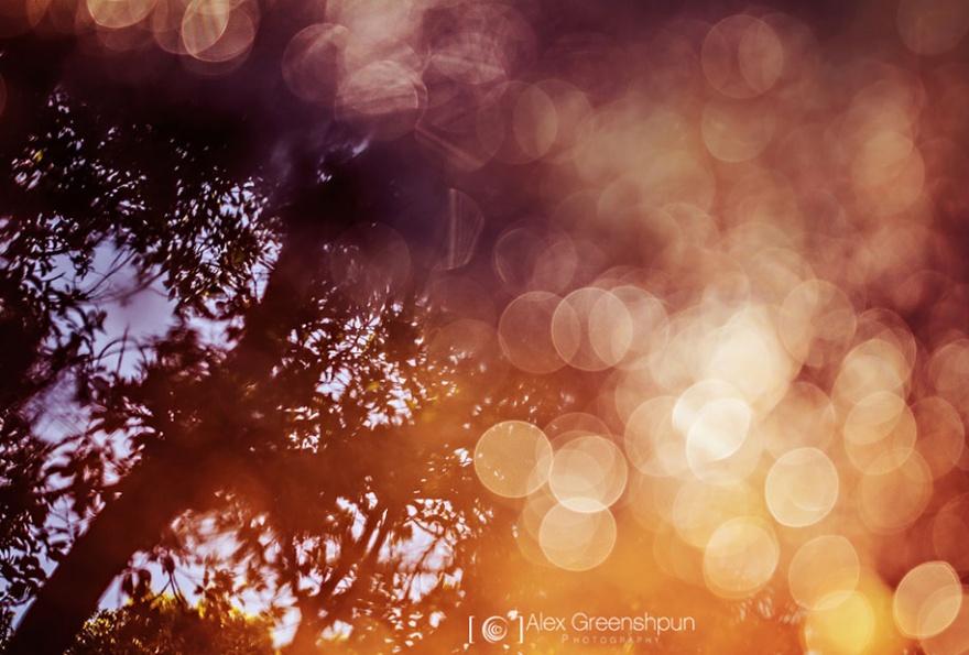 Дыхание осени в снимках Alex Greenshpun (25 фото)