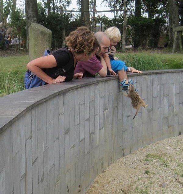 Животные беспощадны! (17 фото + 5 гифок)