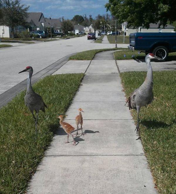Трогательные животные и их детишки (18 фото + 1 гифка)