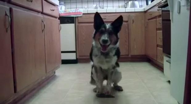 Ваш пес такого точно не делает (1 фото + 1 видео)