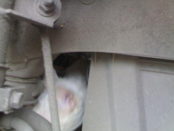Очень неожиданная работа для сотрудников шиномонтажа (5 фото)