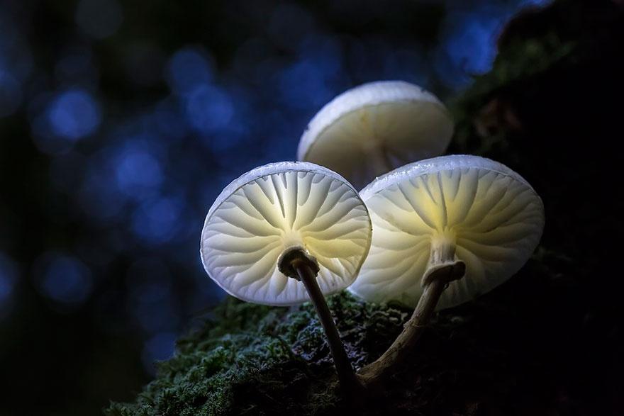 Таинственный мир грибов (20 фото)