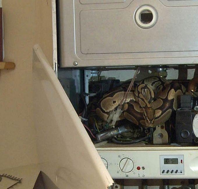 Необычный сюрприз внутри водонагревателя (9 фото)