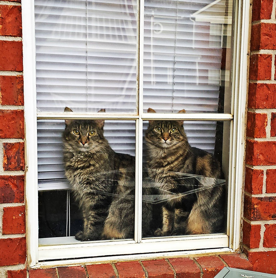 Они ждут! (17 фото)