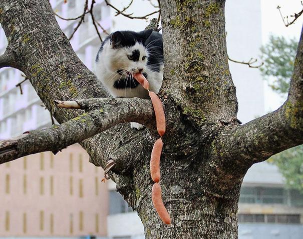 Коты-воришки, попавшиеся с поличным (16 фото)