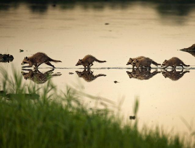 Дикая природа на снимках Кевина Флеминга (13 фото)