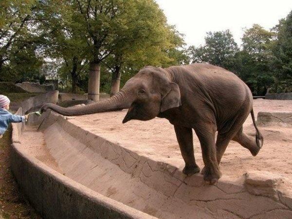 Веселые животные всегда вне конкуренции! (19 фото + 3 гифки)