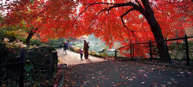 Прогулка в осеннем парке (24 фото)