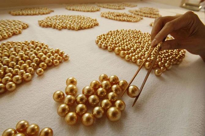 Как выращивают золотой жемчуг (23 фото)