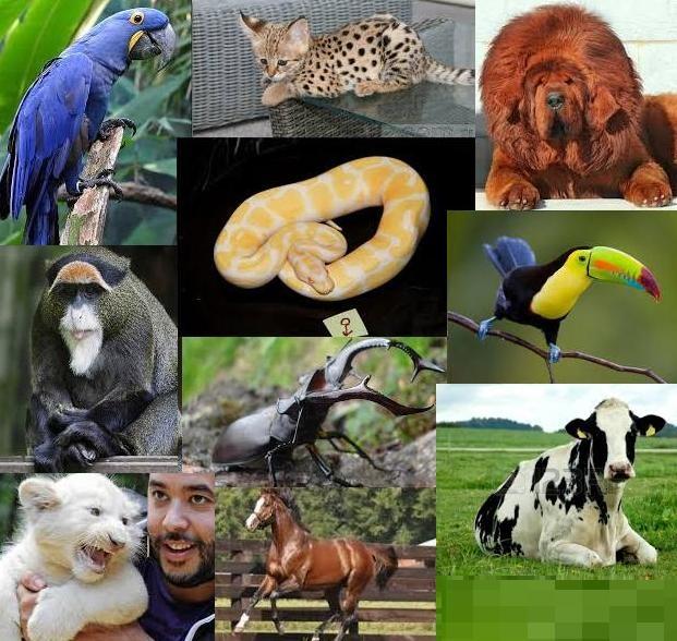 Самые дорогие животные в мире (11 фото)