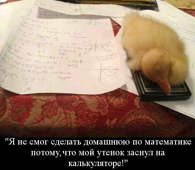 Смешные картинки с надписями 13.10.2014 (18 фото)