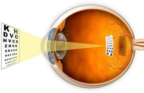 20 невероятных фактов о глазах и зрении (21 фото)