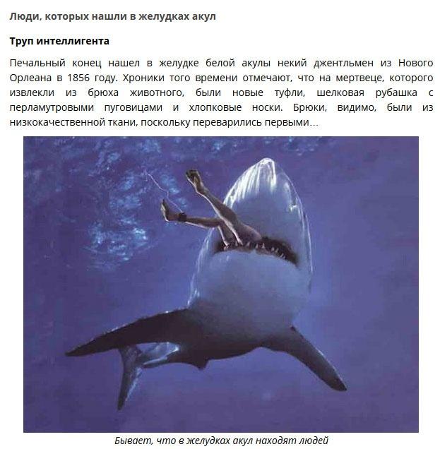 Необычные находки в желудках акул (9 фото)