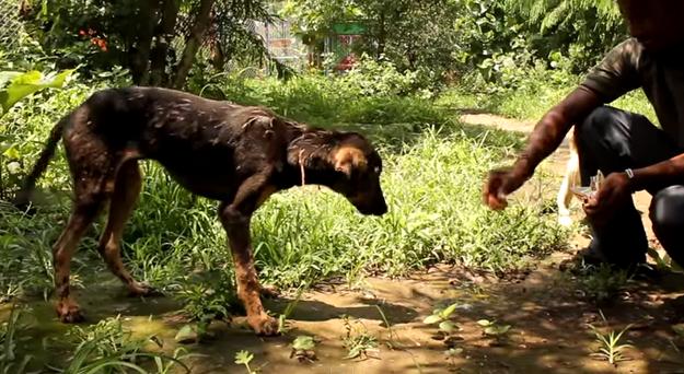 Чудесное спасение окаменевшей собаки из плена застывшей смолы (1 видео + 2 фото)