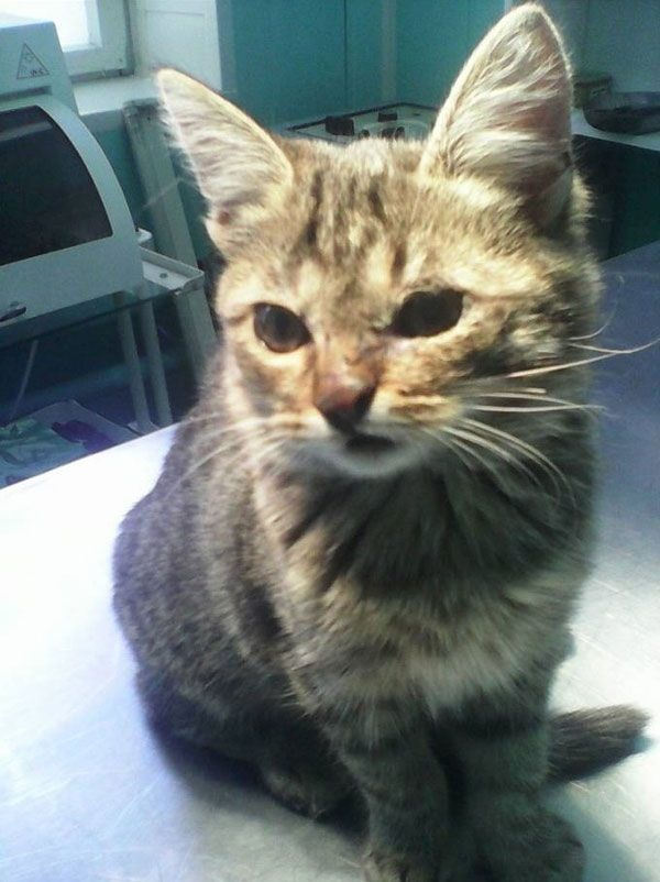 Котенок, пострадавший от живодеров и спасенный детьми (4 фото)