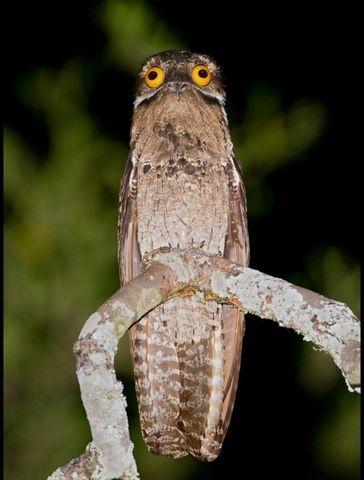 Шокирующая птичка (13 фото)
