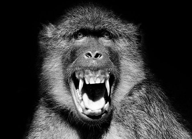 Лучшее с конкурса фотографии National Geographic 2014 (27 фото)