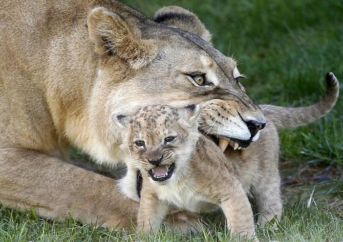 Фотографии животных за неделю (16 фото)