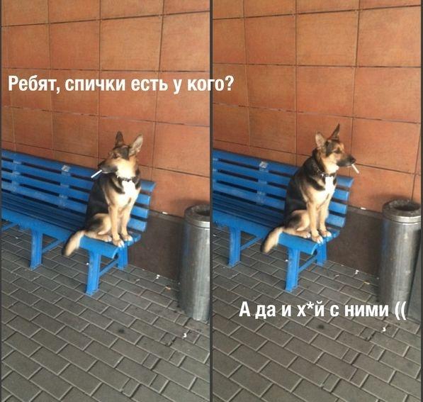 Веселые картинки 18.10.2014 (28 фото)