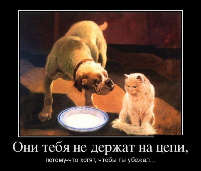 Демотиваторы 20.10.2014 (30 фото)