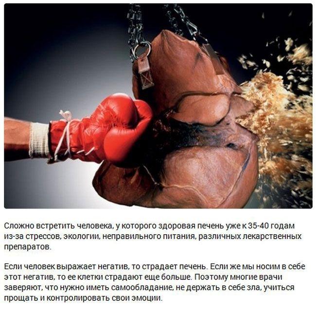 Интересные факты о внутренних органах (15 фото)