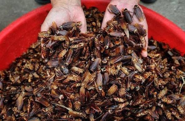 Тайская школьница придумала гениальный способ борьбы с тараканами (1 фото)