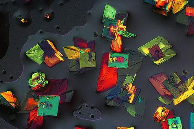 Лучшие фотографии с конкурса Nikon Small World 2014 (34 фото)