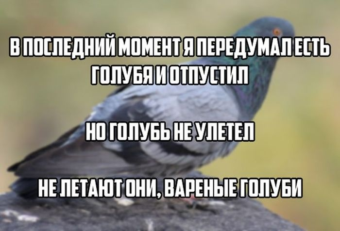 Веселые картинки 24.10.2014 (15 фото)