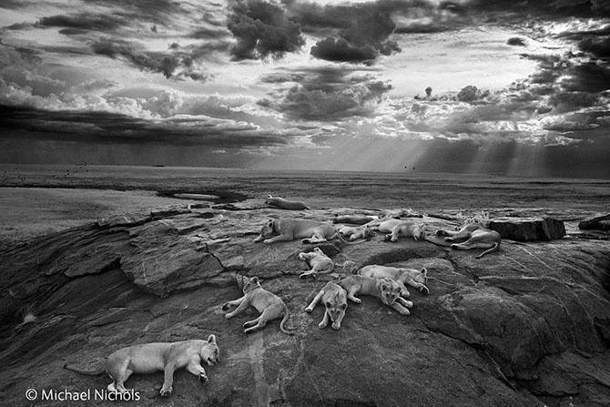 Лучшие фотографии дикой природы 2014 года (11 фото)