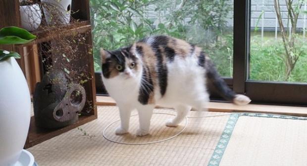 Как поймать кота в ловушку (10 фото)