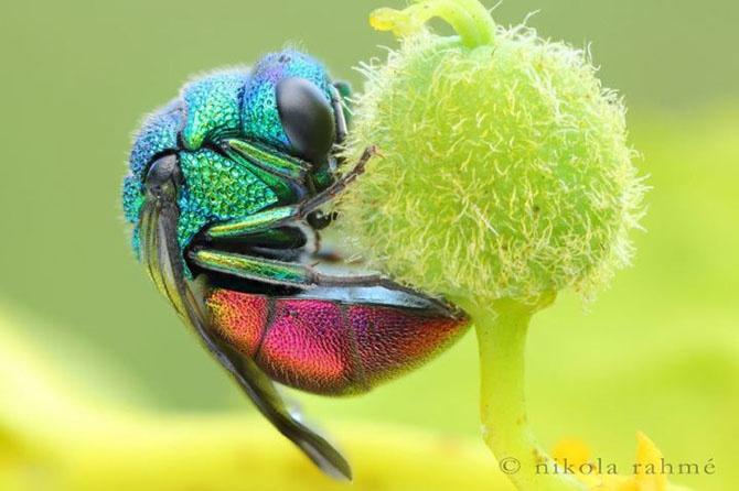 Животные самых неожиданных цветов (20 фото)
