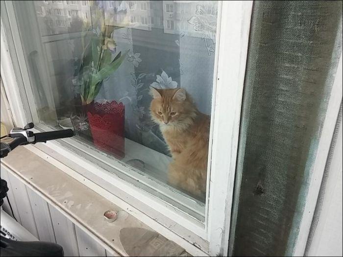 Как кот закрыл своего хозяина на балконе (10 фото)